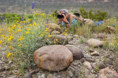 Gary Livingston photographing spring wildflowers