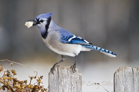 How to get hungry birds to perch up? ...scatter some bread crumbs.