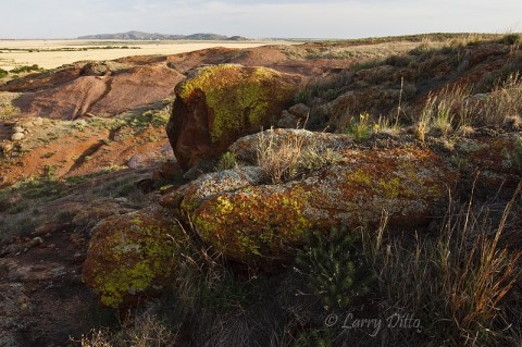 Granite outcroppings and lichens on the Coffman Ranch mountain.  A sister mountain at the town of Granite is in the background.