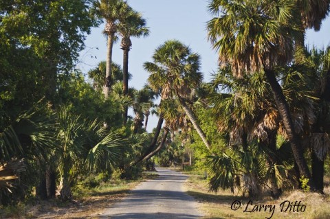 Entrance road to the Sabal Palm Sanctuary in east Brownsville, Texas.