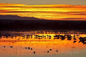 Typical sunrise on a New Mexico marsh in December.