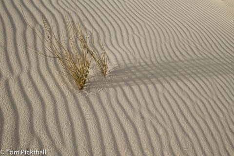 Plant and shadows on a rippling sand dune.