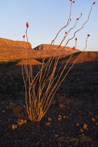 First light on Ocotillo and Santa Elena Canyon.