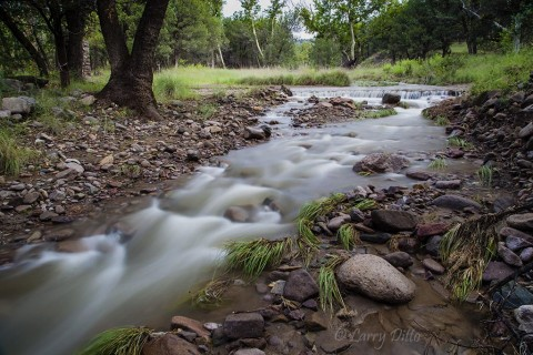 Creek in the Chiricahua Mountains carrying monsoon rainwater to the desert below.