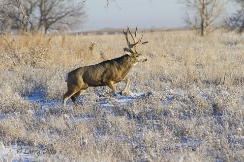 The big bucks were constantly on the move in a breeding frenzy.
