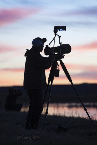Photographer working the cranes coming to roost at sunset.
