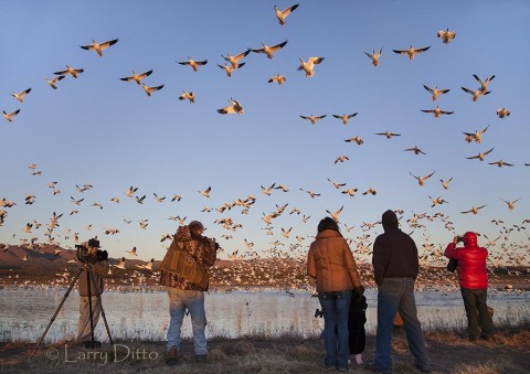 "Photographers at sunrise as snow geese ""blast off"" for the refuge farm fields."