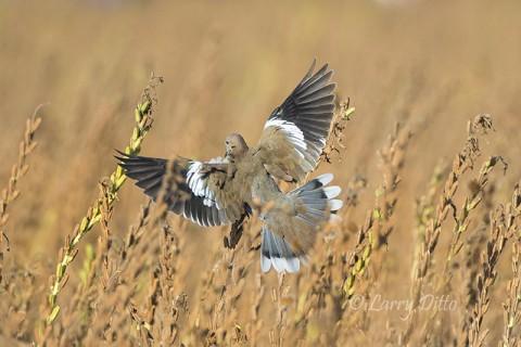 Typical landing shot.