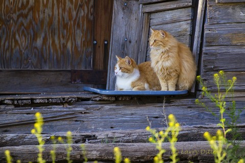 House Cats living on porch of old building in the village of Lipscomb.