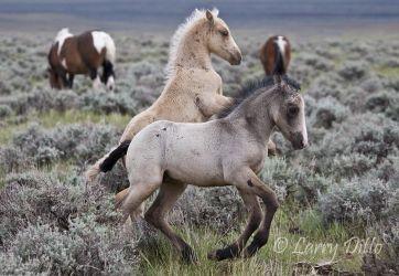 Horse,_Wild_70K2877