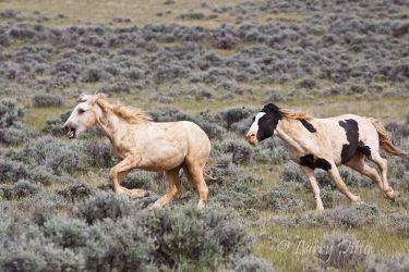 Horse,_Wild_MG_9548~0