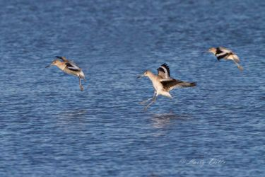 Willets_IMG_9739