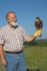 falconer_Larry_Ditto_crw64