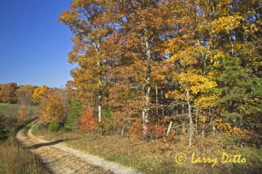 Autumn leaves/colors, near Jasper, Arkansas, Ozark Mountains and country road