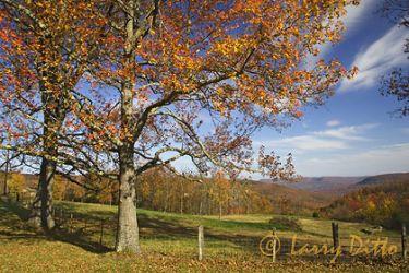 Arkansas_autumn_LarryDitto