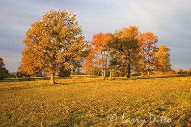 Autumn_Color_larry_ditto_x0