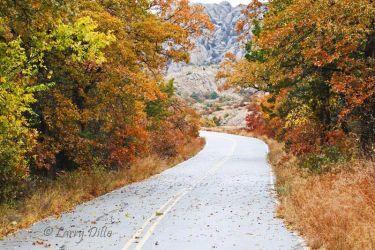 Autumn_Colors_Larry_Ditto_70K0421