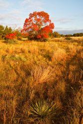 Autumn_Colors_Larry_Ditto_70K8303