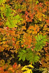 Autumn_Ground_Cover_MG_1434