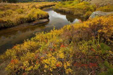 Autumn_Meadow_MG_2397