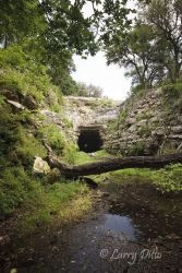 Old Tunnel Bat_Cave_X0Z0816