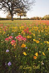 Berclair, Texas cemetary