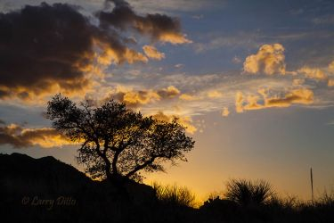 Oak and sotol in the Chisos Mountains, Big Bend National Park at sunset