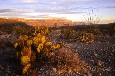 Big_Bend_National_Park_4_Larry_Ditto