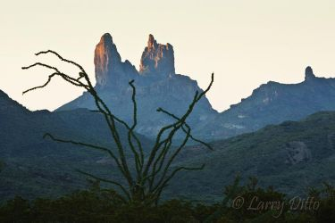Mule Ears and ocotillo in Big Bend National Park, Texas, July