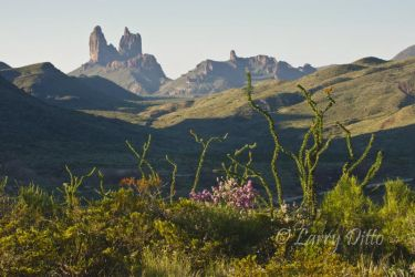 Mule Ears and Cenizo in bloom, Big Bend National Park, Texas, July