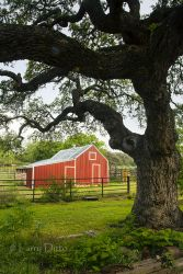 Red barn at Block Creek B&B