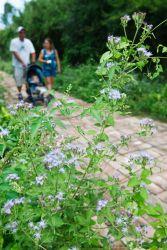 Butterfly Garden_70K5665