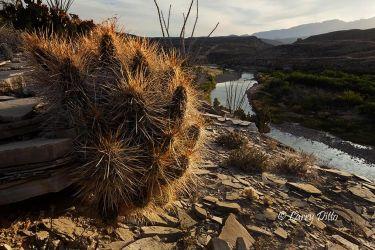 Cactus___Rio_Grande_MG_1952