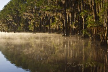 Caddo_Lake_Larry_Ditto_MG_2593