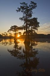 Caddo_Lake_Larry_Ditto_X0Z0750