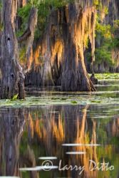 Caddo_Lake,_Texas_Larry_Ditto_MG_6563