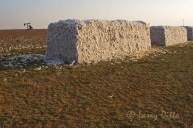 Cotton_bales_larry_ditto_mg4556