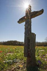 Kenedy Ranch cemetary in spring