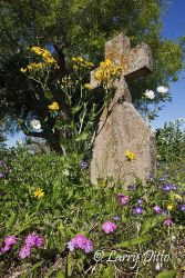 Cowboy's Grave on the Kenedy Ranch