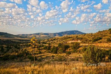 Davis Mountains and agave in bloom, Texas, July