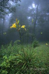 El_Cielo_Biosphere_Reserve_11_Larry_Ditto