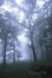 Fog in the cloud forest at El Cielo Biosphere Reserve, Tamaulipas, Mexico