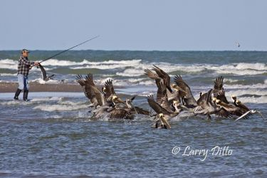 Fishing_with_Pelicans_MG_0356