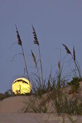 Full_Moon___Sea_Oats_Larry_Ditto_MG_2220