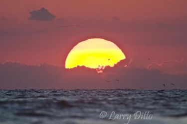 Gulf_of_Mexico_Larry_Ditto_07_0554
