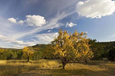 Hill_Country_Autumn_Larry_Ditto_X0Z8219