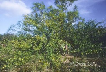 Hugh_Ramsey_Nature_Park_4_Larry_Ditto
