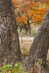 Lost_Maples_State_Park_Larry_Ditto_70K09160