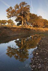 Creek, McClelland Ranch, Texas