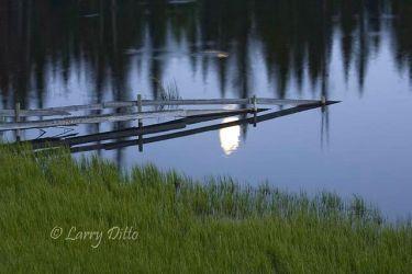 Moonlight on pond, British Columbia, June